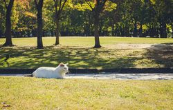 Lonely cat in the sunny garden:Fukuoka Japan Stock Images