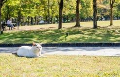 Lonely cat in the sunny garden:Fukuoka Japan Stock Photos