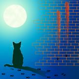 Lonely cat under the moon light Royalty Free Stock Photo