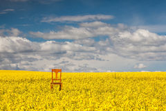 Lonely chair on the empty rape field Stock Photography