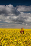 Lonely chair on the empty rape field Royalty Free Stock Image