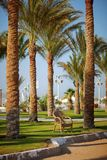 Lonely chair of palm trees on the beach Royalty Free Stock Photo