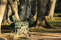 Lonely Chair under Sunshine in the Woods Stock Photos