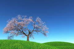 Lonely Cherry Blossom Tree in a meadow 3D render. Green field blue sky Royalty Free Stock Photo
