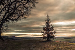 Lonely Christmas Tree Stock Images