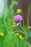 Lonely clover in the meadow. Green background Stock Images
