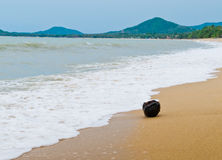 The Lonely Coconut on the Beach. A coconut washed up on the beach of Koh Samui, Thailand Royalty Free Stock Photography