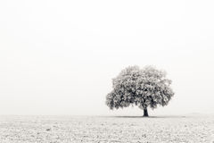 Lonely and cold tree stock image