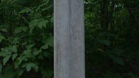 Lonely concrete pillar in a dark dense wild forest. stock video