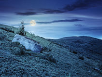 Lonely conifer tree and stone at night Royalty Free Stock Photography