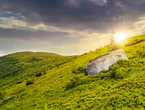 Lonely conifer tree and stone at sunset Stock Photo