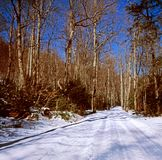 Lonely Country Road In Winter Royalty Free Stock Photography