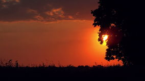 Lonely Countryside Tree in Sunset. Warm Red Sky in Background, Silhouettes of Plants Waving in Wind stock video footage