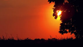Lonely Countryside Tree in Sunset stock footage