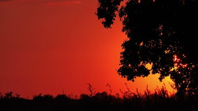 Lonely Countryside Tree in Sunset stock video footage