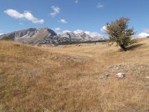 The lonely crab apple tree. And the Durmitor mountain at the background Royalty Free Stock Image
