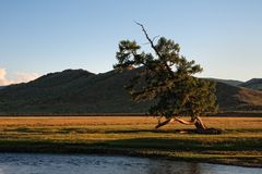 Lonely crooked tree on shore of river Stock Image