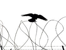 Lonely Crow. Crow on Prisons Fence stock photos