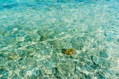 Lonely in Cu Lao Cau sea royalty free stock image