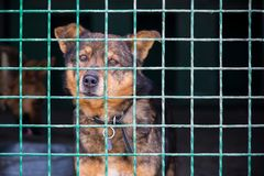 Lonely cute dog looking through the cage. Free space for text stock photography
