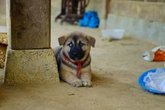 Lonely cute puppy sitting by the pillar. In a trip to the mountainous land Hang Kia, I shot this photo. It`s really lovely puppy stock photos