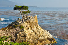 Lonely cypress Big Sur Stock Photos