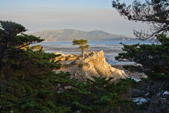 Lonely Cypress Tree Stock Images