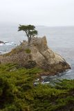 Lonely cypress tree Stock Photo