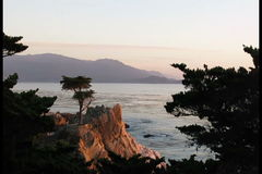 Lonely cypress tree on coastline stock video