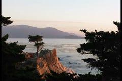 Lonely cypress tree on coastline stock video