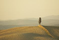 Lonely cypress tree in hill stock photos