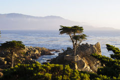 Lonely Cypress Tree Stock Photography