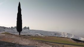 A lonely cypress with a white travertines in a distance, Pamukkale, Turkey. 4k. Zooming a lonely cypress with a white limestone travertines in a distance stock video footage