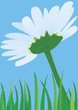 Lonely daisy. Chamomile flower against the blue sky, illustration raster Stock Image