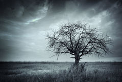 Lonely dead tree. Stock Images