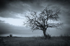 Lonely dead tree. Stock Image