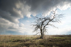 Lonely dead tree Royalty Free Stock Photography