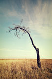 Lonely dead tree. Royalty Free Stock Photography