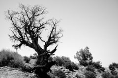 Lonely dead tree. Art nature Royalty Free Stock Photo