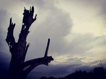 Lonely dead tree and Cloudy Sky. Art nature. stock photos
