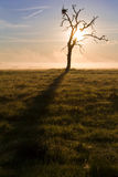 Lonely dead tree at dawn Stock Photography