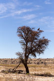Lonely dead tree with eagle landscape Royalty Free Stock Images