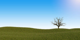 Lonely dead tree in the field Stock Image