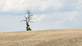 Lonely Dead Tree on the horizon of a ploughed field Stock Image