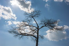 Lonely dead tree. Nature Art. against the blue sky with clouds, sun Royalty Free Stock Image