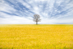 Lonely dead tree Stock Photos