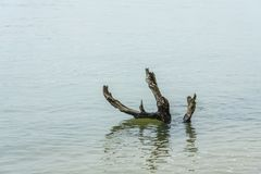 Lonely dead Tree in the River Royalty Free Stock Photography