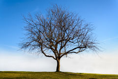 Lonely dead tree with sky Stock Photo