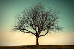 Lonely dead tree with sky Stock Photography