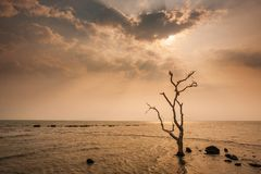 A lonely dead tree stand by the sea, dramatic storm dark cloudy sky over sea. Abandoned dead tree in storm sea. Boiling, climate. Change, global warming. Low royalty free stock images